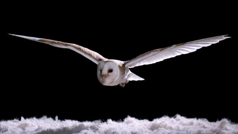 How Do Owls Fly So Quietly?