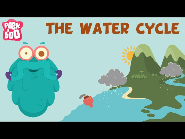 The Water Cycle For Kids Explained