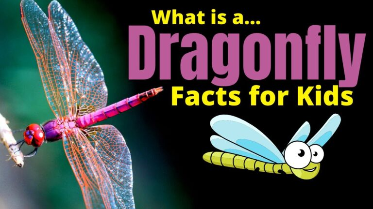 What Is A Dragonfly?